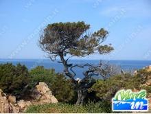Spiagge e Itinerari - Spiaggia Li Cossi - Costa Paradiso